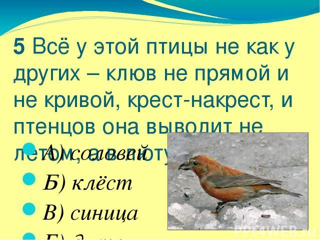 5 Всё у этой птицы не как у других – клюв не прямой и не кривой, крест-накрест, и птенцов она выводит не летом, а в лютую стужу. А) соловей Б) клёст В) синица Г) дятел