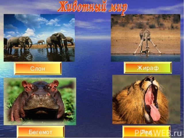 Лев Жираф Бегемот Слон