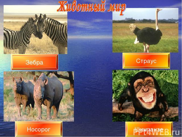 Шимпанзе Страус Зебра Носорог