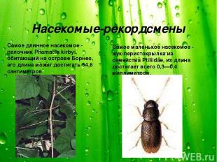 Насекомые-рекордсмены Самое длинное насекомое - палочник Phamacia kirbyi, обитаю