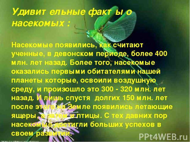 Удивительные факты о насекомых : Насекомые появились, как считают ученные, в девонском периоде, более 400 млн. лет назад. Более того, насекомые оказались первыми обитателями нашей планеты которые, освоили воздушную среду, и произошло это 300 - 320 м…