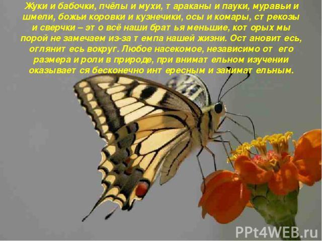 Жуки и бабочки, пчёлы и мухи, тараканы и пауки, муравьи и шмели, божьи коровки и кузнечики, осы и комары, стрекозы и сверчки – это всё наши братья меньшие, которых мы порой не замечаем из-за темпа нашей жизни. Остановитесь, оглянитесь вокруг. Любое …