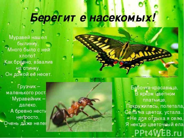 Берегите насекомых! Муравей нашел былинку, Много было с ней хлопот. Как бревно, взвалив на спинку, Он домой ее несет. Грузчик – маленького роста. Муравейник – далеко. А бревно нести непросто, Очень даже нелегко. Бабочка-красавица, В ярком цветном пл…