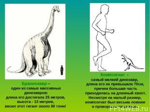 Брахиозавр – один из самых массивных динозавров: длина его достигала 25 метров,