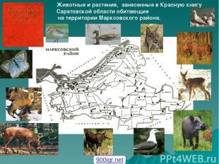 Животные и растения, занесенные в Красную книгу Саратовской области обитающие на