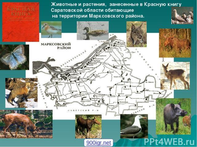 Животные и растения, занесенные в Красную книгу Саратовской области обитающие на территории Марксовского района. 900igr.net