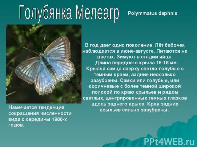 Polymmatus daphnis В год дает одно поколение. Лёт бабочек наблюдается в июне-августе. Питаются на цветах. Зимуют в стадии яйца.  Длина переднего крыла 16-18 мм. Крылья самца сверху светло-голубые с темным краем, задние несколько зазубрены. Самки ил…