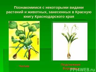 Познакомимся с некоторыми видами растений и животных, занесенных в Красную книгу