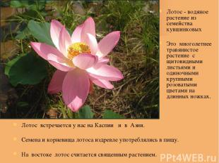 Лотос встречается у нас на Каспии и в Азии. Семена и корневища лотоса издревле у