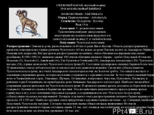 ПОЗВОНОЧНЫЕ - VERTEBRATA Отряд: Парнокопытные - Artiodactyla Семейство: Полороги