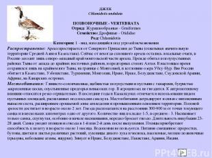 ПОЗВОНОЧНЫЕ - VERTEBRATA Отряд: Журавлеобразные - Gruiformes Семейство: Дрофиные