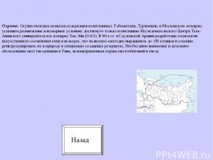 Охрана: Осуществлялись попытки содержания в питомниках Узбекистана, Туркмении, в