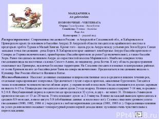 ПОЗВОНОЧНЫЕ - VERTEBRATA Отряд: Гусеобразные - Anseriforme Семейство: Утиные - A