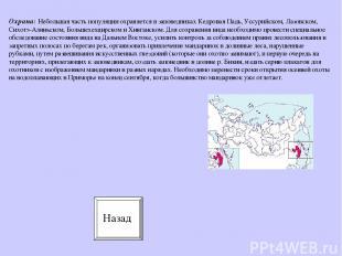Охрана: Небольшая часть популяции охраняется в заповедниках Кедровая Падь, Уссур