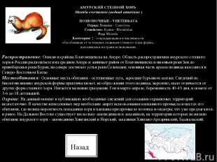 Распространение: Описан из района Благовещенска на Амуре. Область распространени