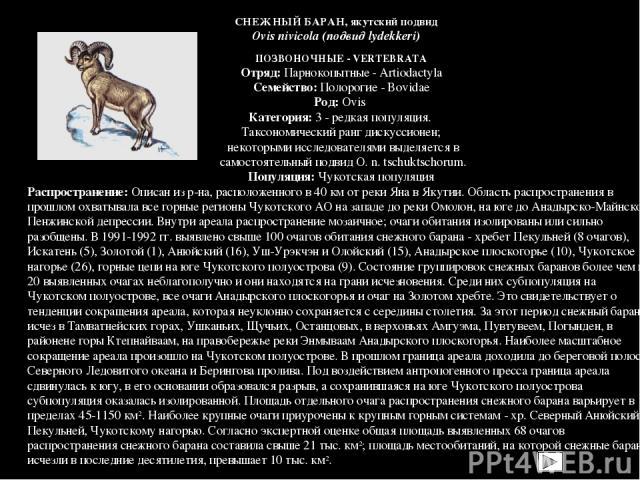 ПОЗВОНОЧНЫЕ - VERTEBRATA Отряд: Парнокопытные - Artiodactyla Семейство: Полорогие - Bovidae Род: Ovis Категория: 3 - редкая популяция. Таксономический ранг дискуссионен; некоторыми исследователями выделяется в самостоятельный подвид O. n. tschuktsch…