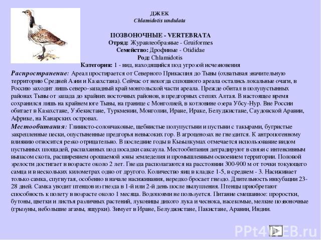 ПОЗВОНОЧНЫЕ - VERTEBRATA Отряд: Журавлеобразные - Gruiformes Семейство: Дрофиные - Otididae Род: Chlamidotis Категория: 1 - вид, находящийся под угрозой исчезновения Распространение: Ареал простирается от Северного Прикаспия до Тывы (охватывая значи…