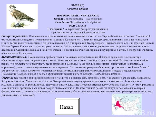 ПОЗВОНОЧНЫЕ - VERTEBRATA Отряд: Соколообразные - Falconiformes Семейство: Ястребиные - Accipitridae Род: Circaetus Категория: 2 - спорадично распространенный вид с регионально сокращающейся численностью Распространение: Основная часть ареала занимае…