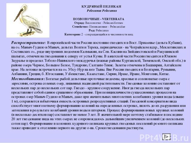 ПОЗВОНОЧНЫЕ - VERTEBRATA Отряд: Веслоногие - Pelecaniformes Семейство: Пеликановые - Pelecanidae Род: Pelecanus Категория: 2 - сокращающийся в численности вид Распространение: В европейской части России постоянно гнездится в Вост. Приазовье (дельта …