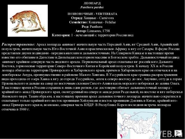 ПОЗВОНОЧНЫЕ - VERTEBRATA Отряд: Хищные - Carnivora Семейство: Кошачьи - Felidae Род: Panthera Автор: Linnaeus, 1758 Категория: 1 - исчезающий с территории России вид  Распространение: Ареал леопарда занимает значительную часть Передней Азии, юг Сре…