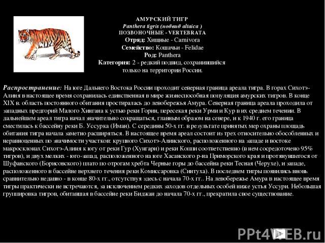 Распространение: На юге Дальнего Востока России проходит северная граница ареала тигра. В горах Сихотэ-Алиня в настоящее время сохранилась единственная в мире жизнеспособная популяция амурских тигров. В конце XIX в. область постоянного обитания прос…