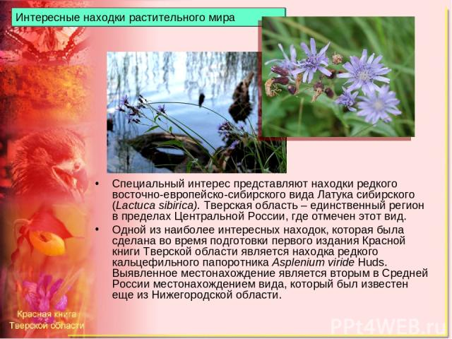 Интересные находки растительного мира Специальный интерес представляют находки редкого восточно-европейско-сибирского вида Латука сибирского (Lactuca sibirica). Тверская область – единственный регион в пределах Центральной России, где отмечен этот в…