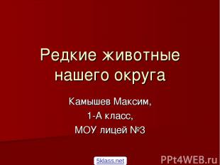 Редкие животные нашего округа Камышев Максим, 1-А класс, МОУ лицей №3 5klass.net