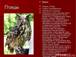 Птицы Филин Раздел: Птицы Отряд: Совообразные Семейство: Совиные Признаки: Очень
