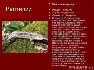 Рептилии Прыткая ящерица Раздел: Рептилии Отряд: Чешуйчатые Семейство: Ящерицы П