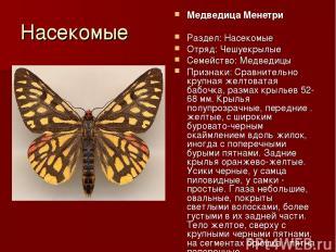 Насекомые Медведица Менетри Раздел: Насекомые Отряд: Чешуекрылые Семейство: Медв