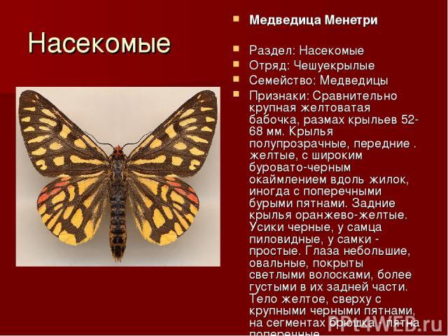 Насекомые Медведица Менетри Раздел: Насекомые Отряд: Чешуекрылые Семейство: Медведицы Признаки: Сравнительно крупная желтоватая бабочка, размах крыльев 52-68 мм. Крылья полупрозрачные, передние . желтые, с широким буровато-черным окаймлением вдоль ж…