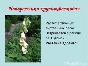 Наперстянка крупноцветковая Растет в хвойных лиственных лесах. Встречается в рай