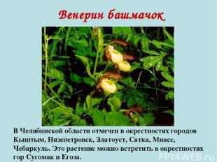 Венерин башмачок В Челябинской области отмечен в окрестностях городов Кыштым, Ня
