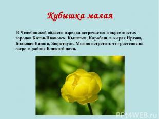 Кубышка малая В Челябинской области изредка встречается в окрестностях городов К