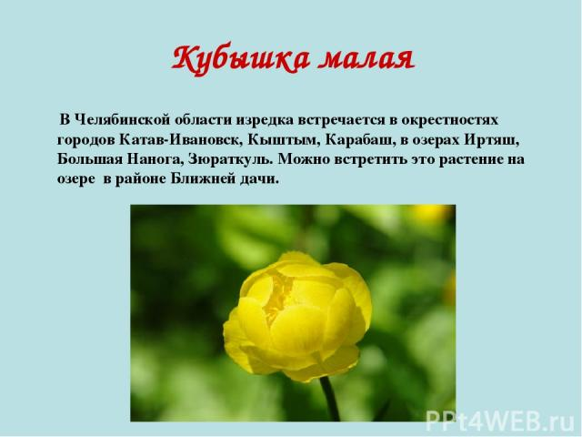 Кубышка малая В Челябинской области изредка встречается в окрестностях городов Катав-Ивановск, Кыштым, Карабаш, в озерах Иртяш, Большая Нанога, Зюраткуль. Можно встретить это растение на озере в районе Ближней дачи.