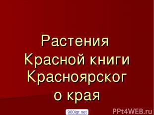 Растения Красной книги Красноярского края 900igr.net