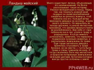 Ландыш майский Много существует легенд, объясняющих его возникновение. На Волге
