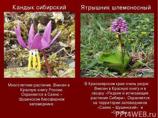Кандык сибирский Многолетнее растение. Внесен в Красную книгу России. Охраняется