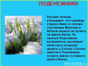 ПОДСНЕЖНИКИ Русская легенда утверждает, что однажды старуха Зима со своими спутн