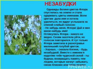 НЕЗАБУДКИ Однажды богиня цветов Флора спустилась на землю и стала одаривать цвет