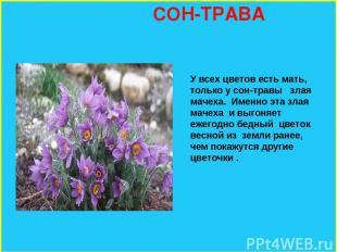 СОН-ТРАВА У всех цветов есть мать, только у сон-травы злая мачеха. Именно эта зл