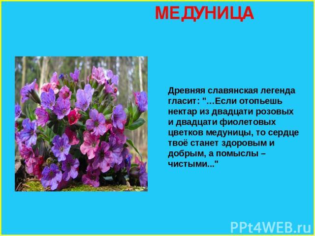 МЕДУНИЦА Древняя славянская легенда гласит: