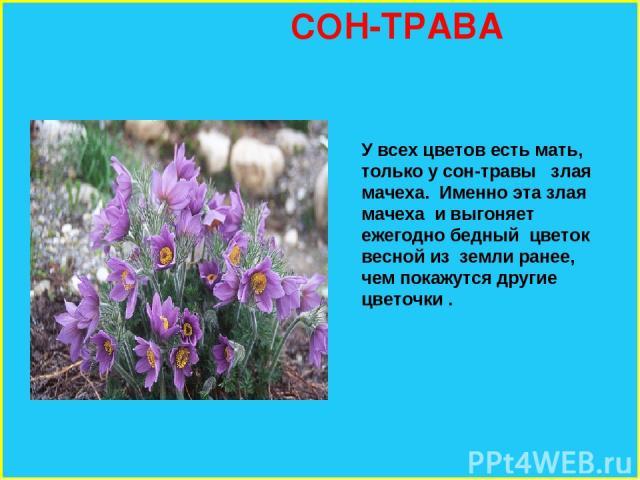 Фото всех цветов земли