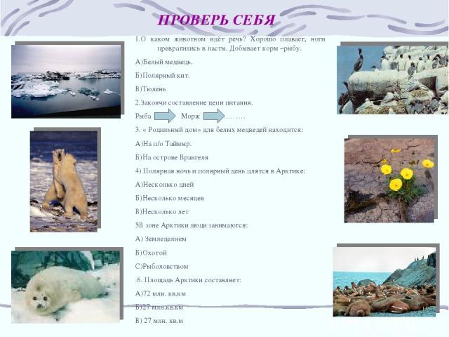 ПРОВЕРЬ СЕБЯ 1.О каком животном идёт речь? Хорошо плавает, ноги превратились в ласты. Добывает корм –рыбу. А)Белый медведь. Б)Полярный кит. В)Тюлень 2.Закончи составление цепи питания. Рыба Морж ………. 3. « Родильный дом» для белых медведей находится:…