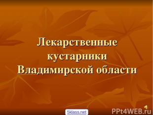 Лекарственные кустарники Владимирской области 5klass.net