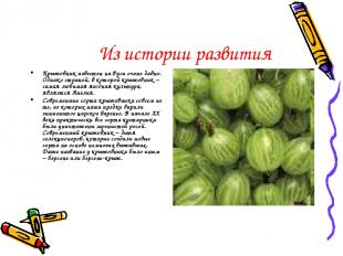 Из истории развития Крыжовник известен на Руси очень давно. Однако страной, в ко
