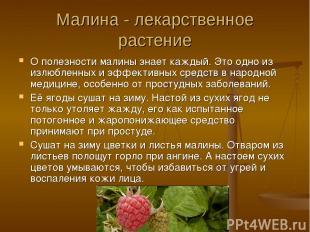 Малина - лекарственное растение О полезности малины знает каждый. Это одно из из