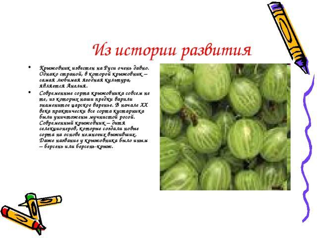 Из истории развития Крыжовник известен на Руси очень давно. Однако страной, в которой крыжовник – самая любимая ягодная культура, является Англия. Современные сорта крыжовника совсем не те, из которых наши предки варили знаменитое царское варенье. В…