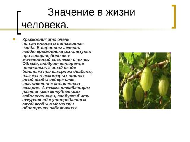 Значение в жизни человека. Крыжовник это очень питательная и витаминная ягода. В народном лечении ягоды крыжовника используют при запорах, болезнях мочеполовой системы и почек. Однако, следует осторожно отнестись к этой ягоде больным при сахарном ди…