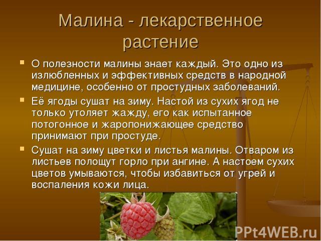 Малина - лекарственное растение О полезности малины знает каждый. Это одно из излюбленных и эффективных средств в народной медицине, особенно от простудных заболеваний. Её ягоды сушат на зиму. Настой из сухих ягод не только утоляет жажду, его как ис…